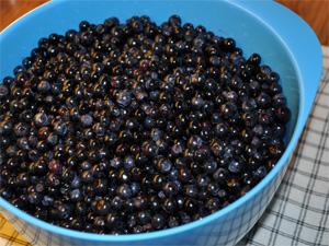 Rensete bær direkte fra Nordmarka
